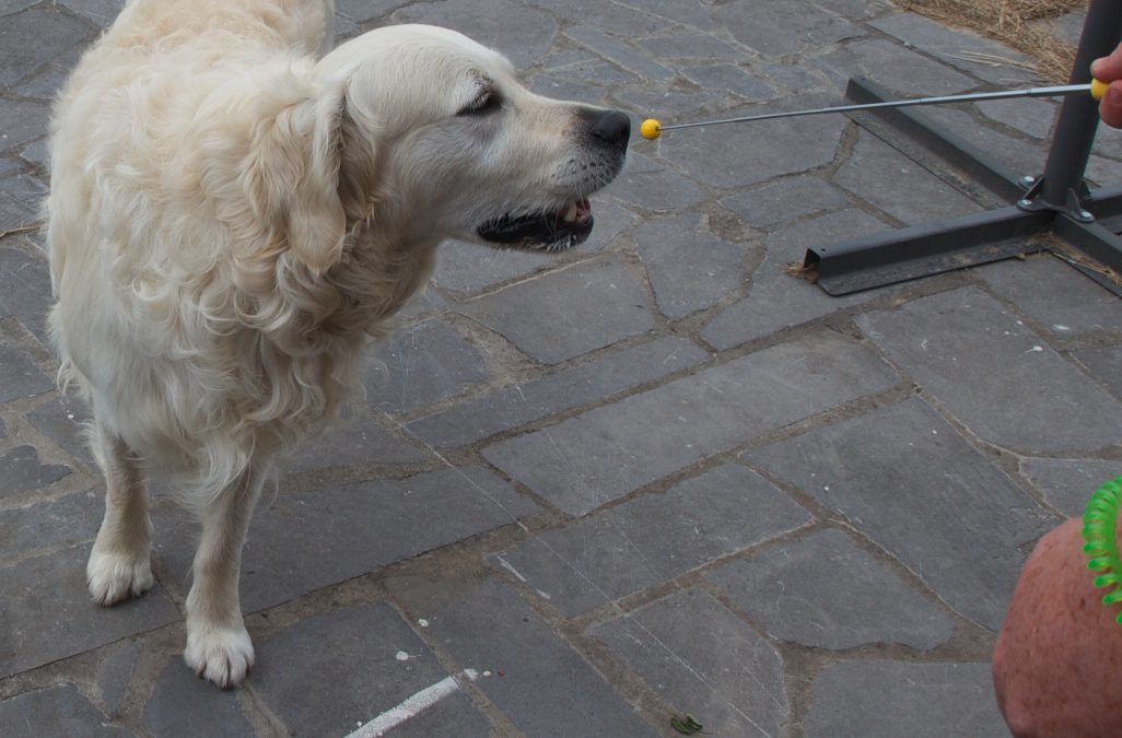 9 manieren om de training van je hond een boost te geven