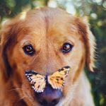 Wat als je hond geen manieren heeft?