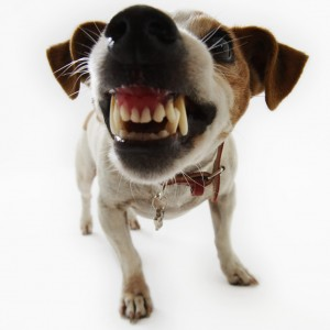 Verminder hondenbeten met 70 procent of meer…