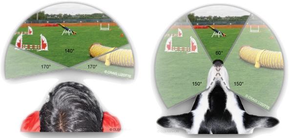 veterinary vision