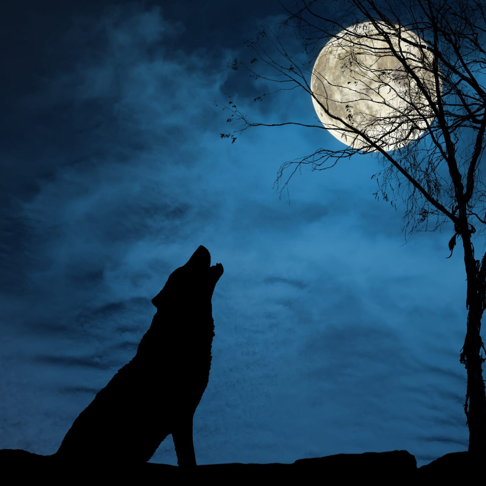 how to draw a coyote howling at the moon