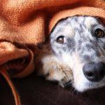 11 tips voor een comfortabel eindejaar voor jou en jouw hond