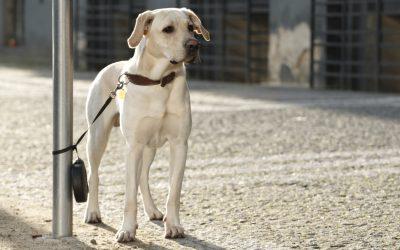 Een hond is voor het leven, of toch niet?