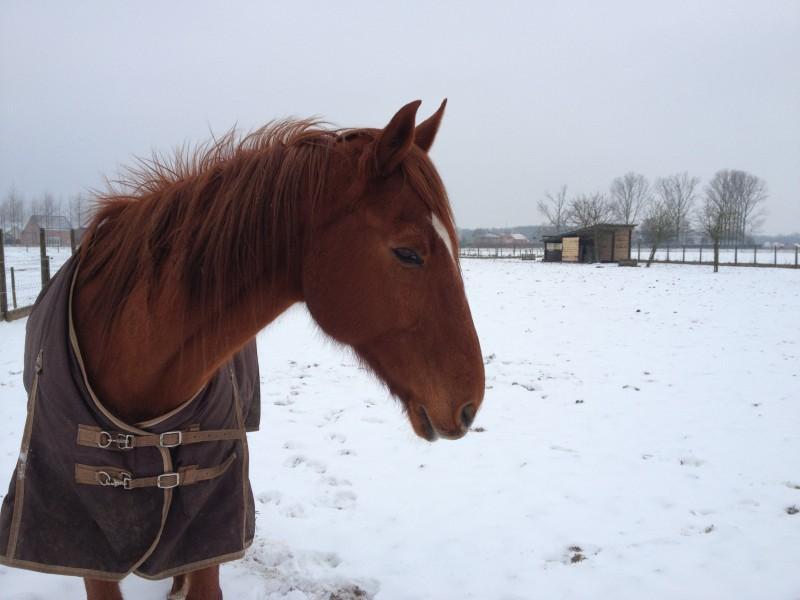 Zingi-in-de-sneeuw-e1366235154453-800x600
