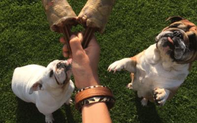 Hersenspelletjes: Verrijk de geest van je hond en pluk de vruchten