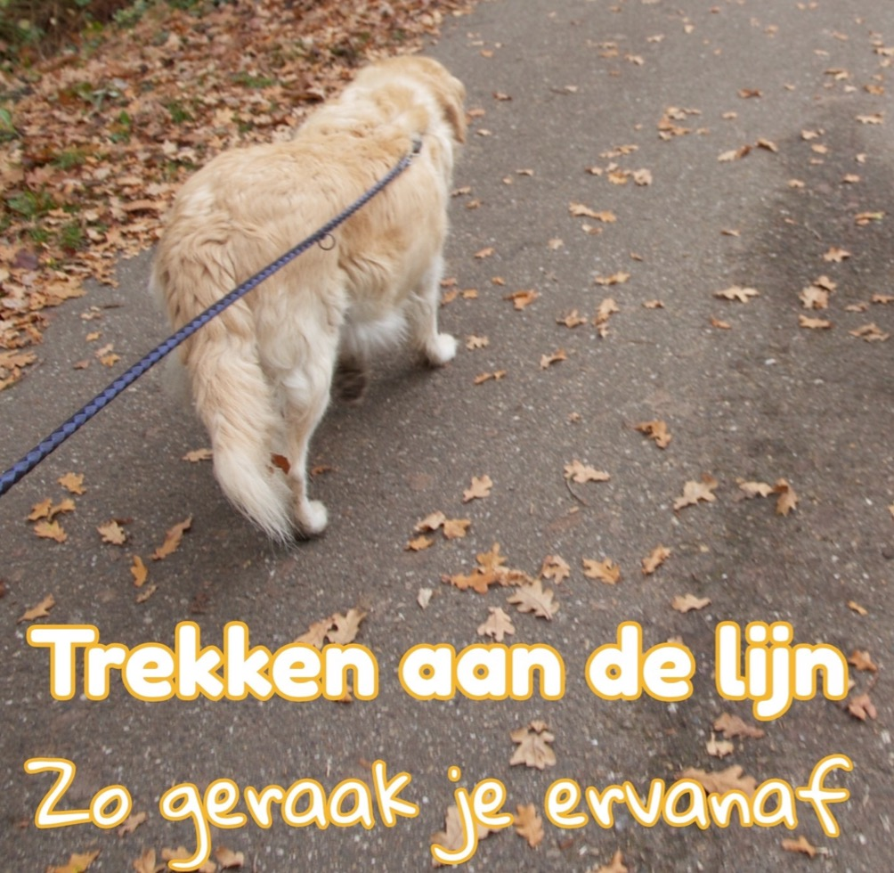 honden trekken aan de riem afleren