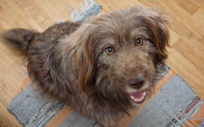Is jouw bedelende hond gokverslaafd?