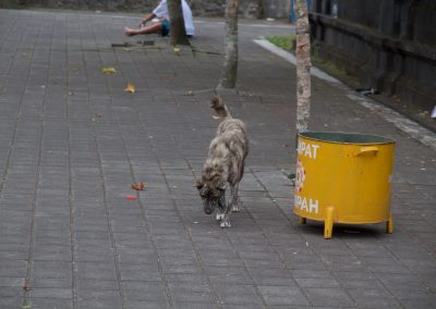 Balinese hond in Besakih - Kwispeltherapie