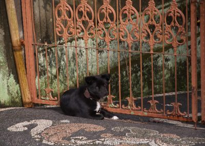 Balinese hond voor poort - Kwispeltherapie