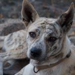 honden van Bali - Kwispeltherapie