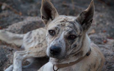 Mijn reisverhaal over de honden van Bali