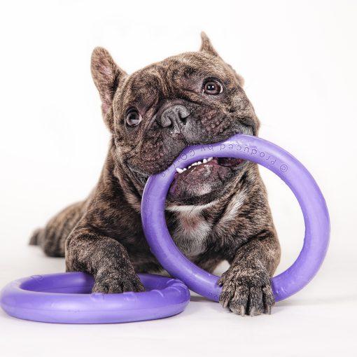 Puller mini met franse bulldog - Kwispeltherapie