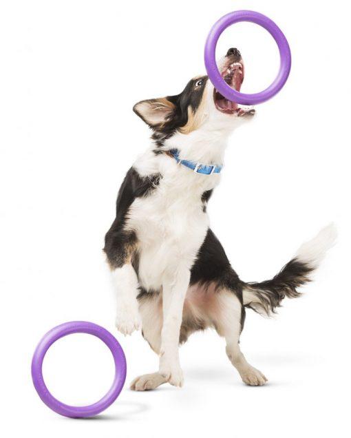 Puller dog training tool met hond - Kwispeltherapie
