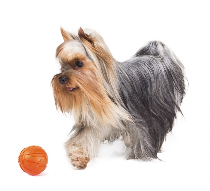 Liker speelbal 5 - kwispeltherapie