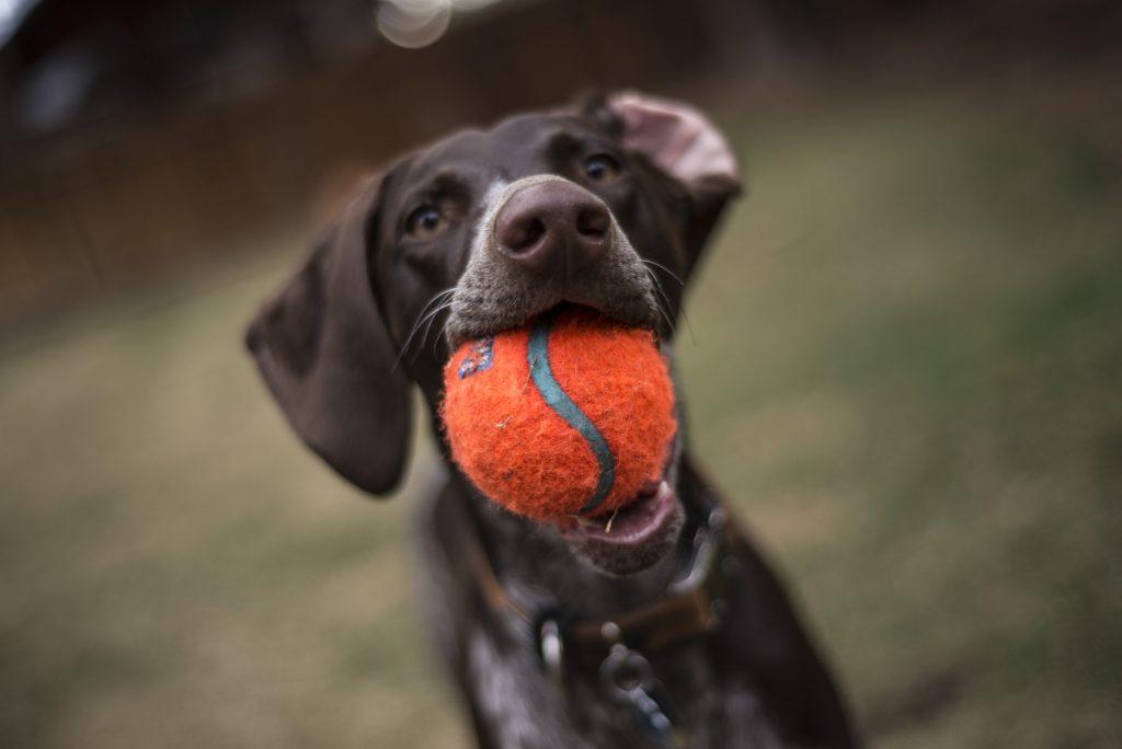 Verbeter de prestaties van je hond met spel - Kwispeltherapie