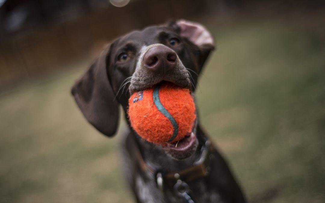 Verbeter onmiddellijk het geheugen van je hond