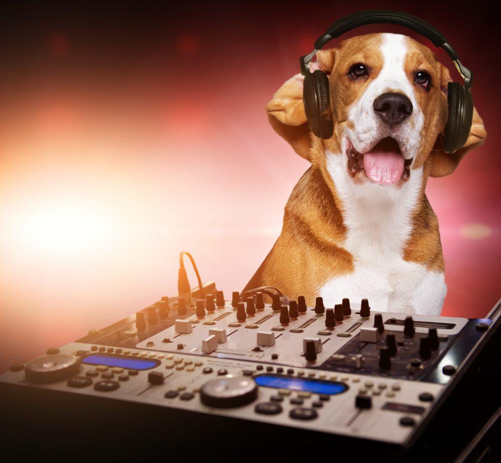 HondenDJ - Kwispeltherapie