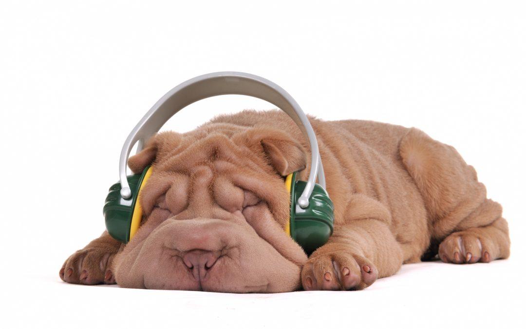 Hoe muziek de wereld van honden kan veranderen
