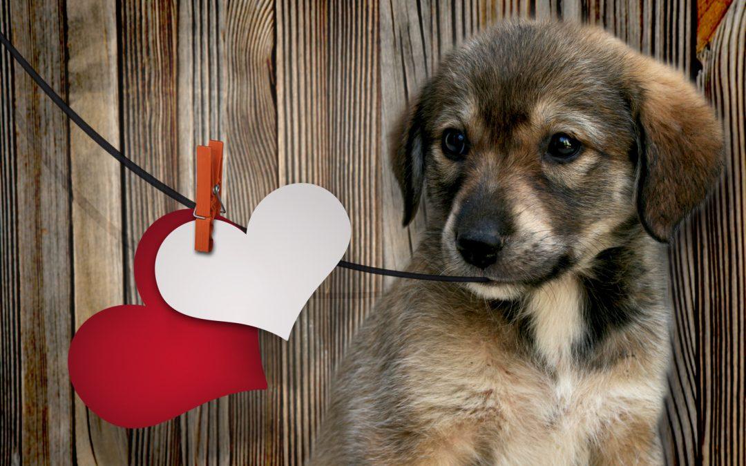 De ideale valentijn, een hond?