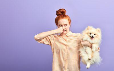 Waarom honden ontlasting eten en wat je eraan kan doen