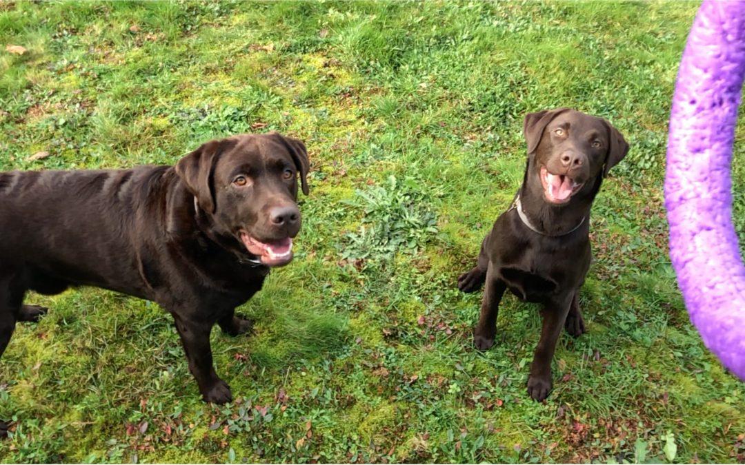 De wondere wereld van spel bij honden