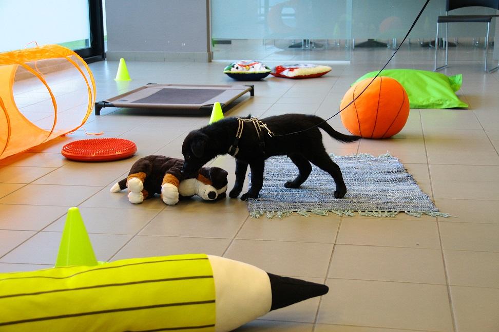 Puppygids: Optimaliseer de ontwikkeling van jouw puppy
