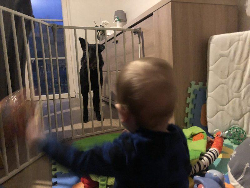 kind-hond relatie management
