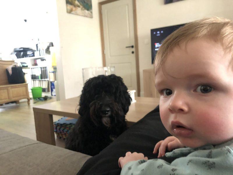 kind-hond zonder dwang