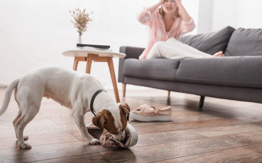 Leer jouw hond een betrouwbare 'los' in 8 makkelijke stappen